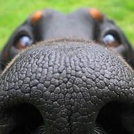 funny-dog-nose-closeups-401__700