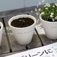 planta-jornal_2-abre