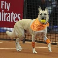 large_C_oDula_-_cachorros_participam_de_torneio_de_t_nis__2-abre_
