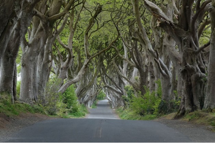 Dark Hedges, na Irlanda do Norte. Foto: Geograph user Colin Park licensed under CC BY-SA 2.0