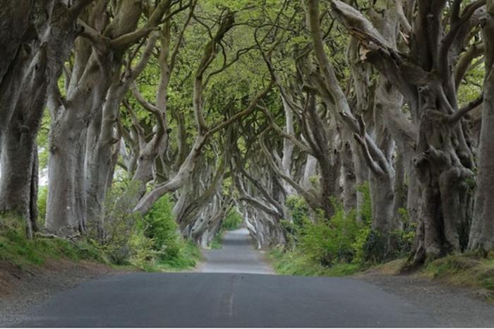 Dark Hedges, na Irlanda do Norte. Foto: Geograph user Colin Park licensed under CC BY-SA 2.0