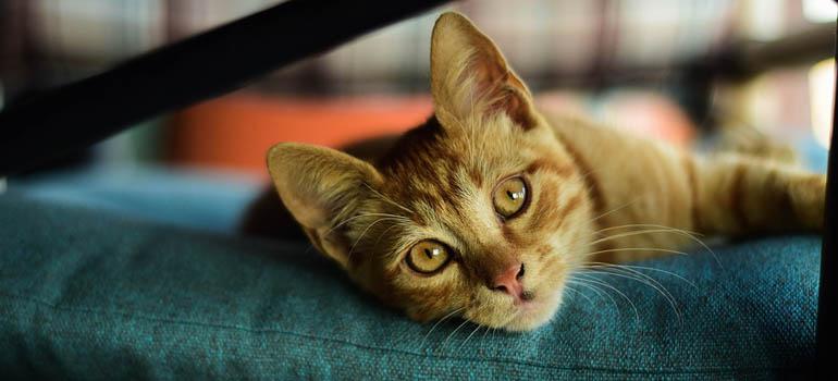 cat-2852208_960_720-abre