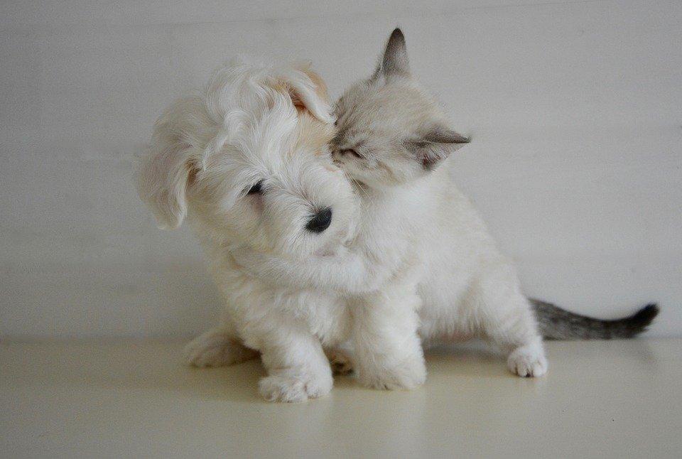 kiss-2728106_960_720